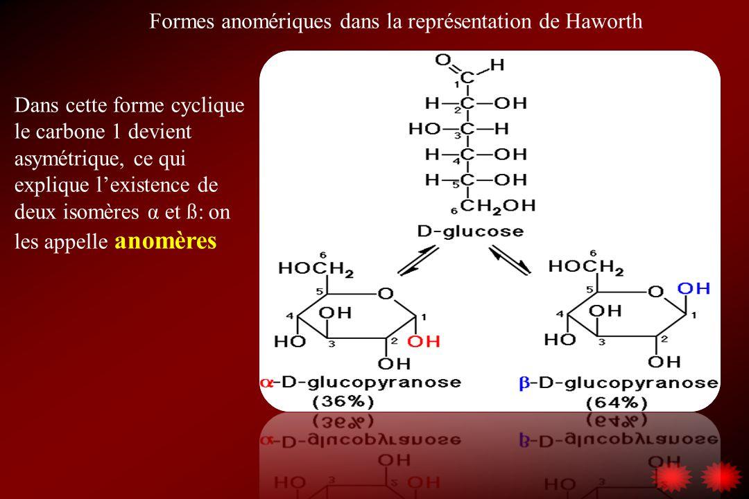 Formes anomériques dans la représentation de Haworth Dans cette forme cyclique le carbone 1 devient asymétrique, ce qui explique lexistence de deux is