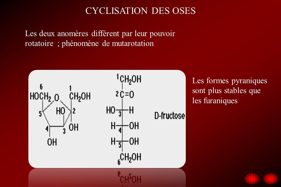 CYCLISATION DES OSES Les deux anomères différent par leur pouvoir rotatoire ; phénomène de mutarotation Les formes pyraniques sont plus stables que le