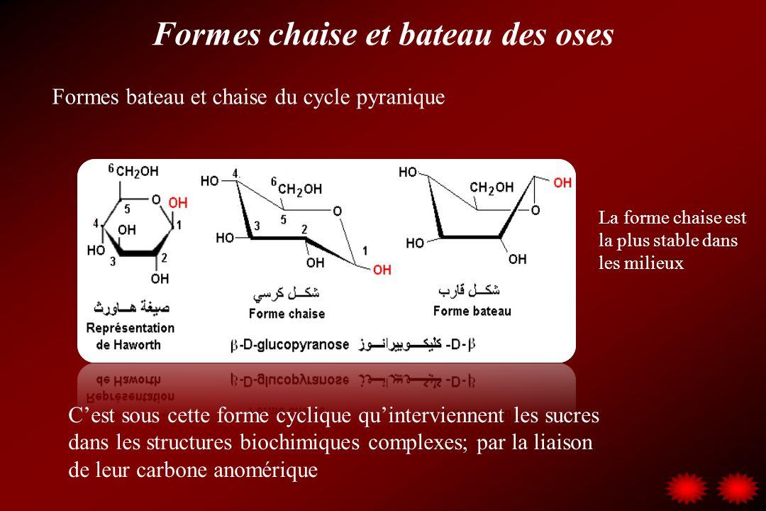 Formes chaise et bateau des oses Cest sous cette forme cyclique quinterviennent les sucres dans les structures biochimiques complexes; par la liaison