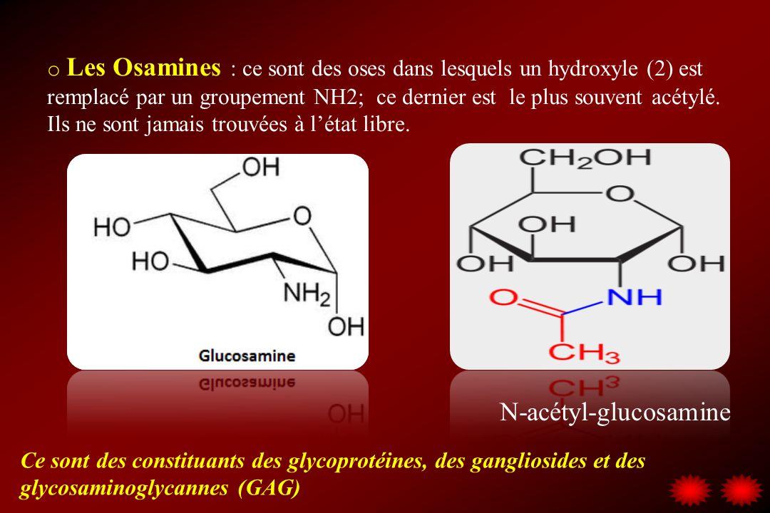 o Les Osamines : ce sont des oses dans lesquels un hydroxyle (2) est remplacé par un groupement NH2; ce dernier est le plus souvent acétylé. Ils ne so