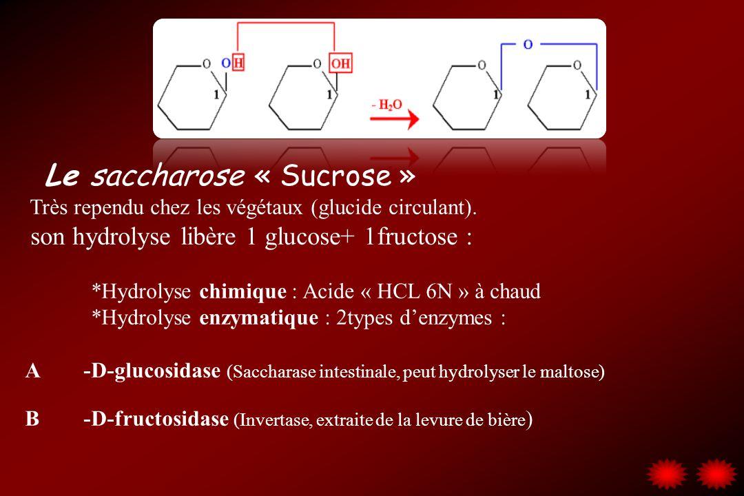 Le saccharose « Sucrose » Très rependu chez les végétaux (glucide circulant). son hydrolyse libère 1 glucose+ 1fructose : *Hydrolyse chimique : Acide