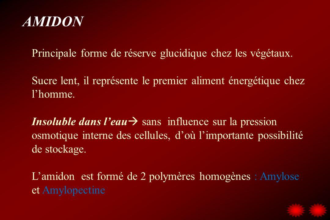 AMIDON Principale forme de réserve glucidique chez les végétaux. Sucre lent, il représente le premier aliment énergétique chez lhomme. Insoluble dans