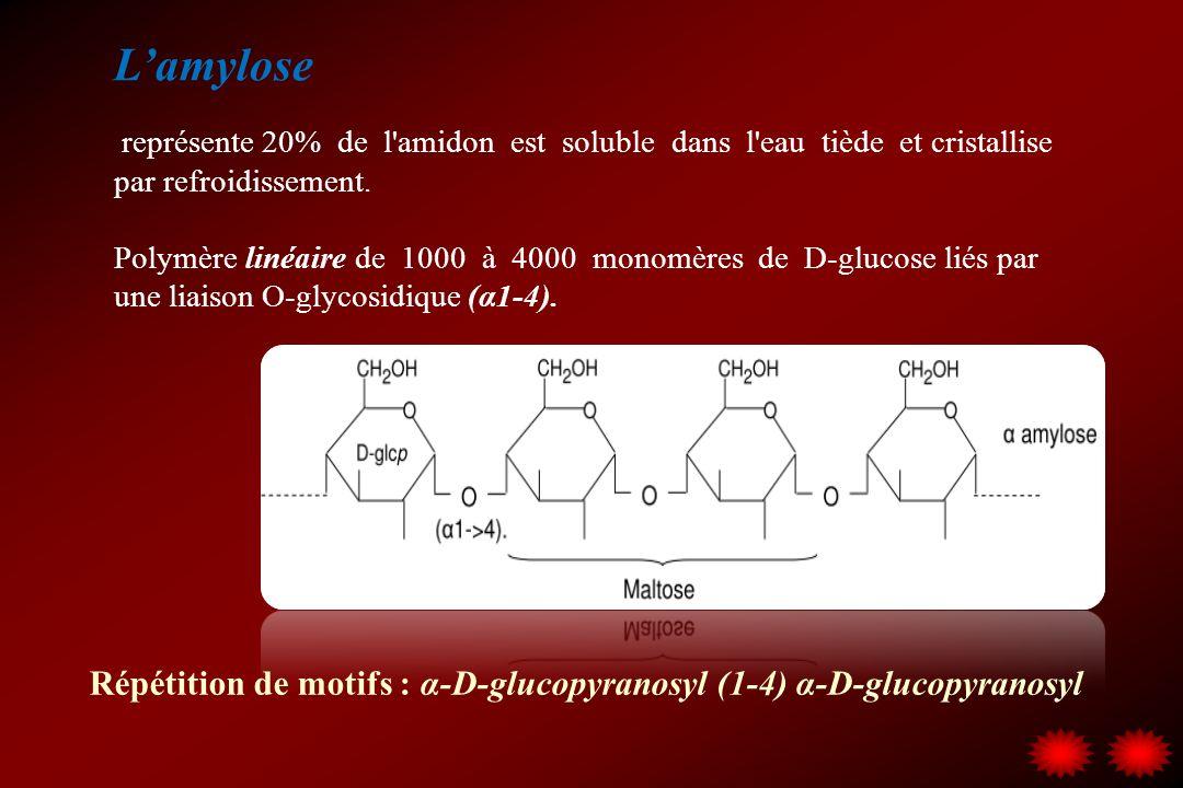 Lamylose représente 20% de l'amidon est soluble dans l'eau tiède et cristallise par refroidissement. Polymère linéaire de 1000 à 4000 monomères de D-g