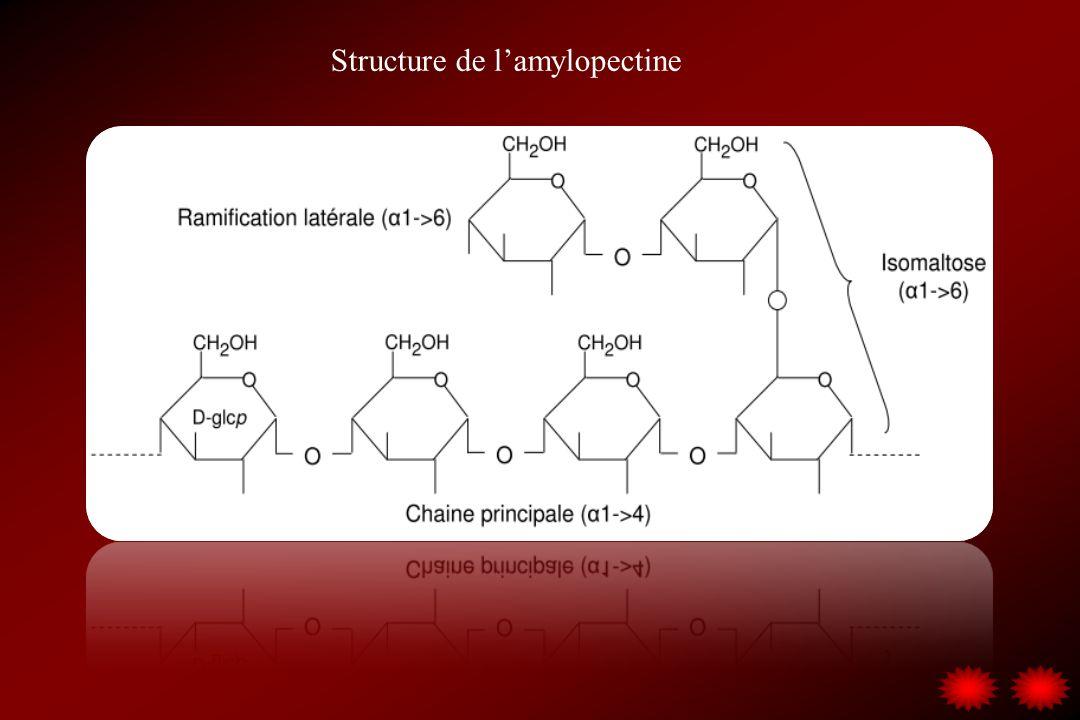 Structure de lamylopectine