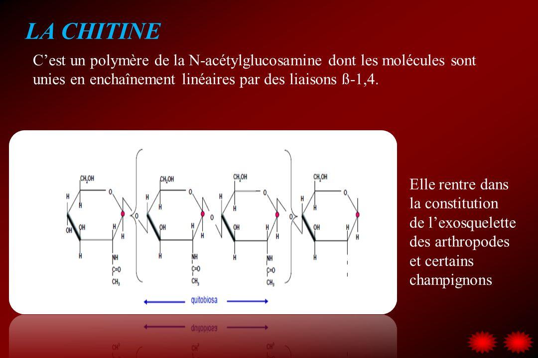 LA CHITINE Cest un polymère de la N-acétylglucosamine dont les molécules sont unies en enchaînement linéaires par des liaisons ß-1,4. Elle rentre dans
