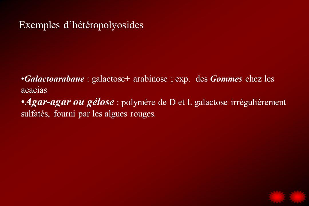 Galactoarabane : galactose+ arabinose ; exp. des Gommes chez les acacias Agar-agar ou gélose : polymère de D et L galactose irrégulièrement sulfatés,