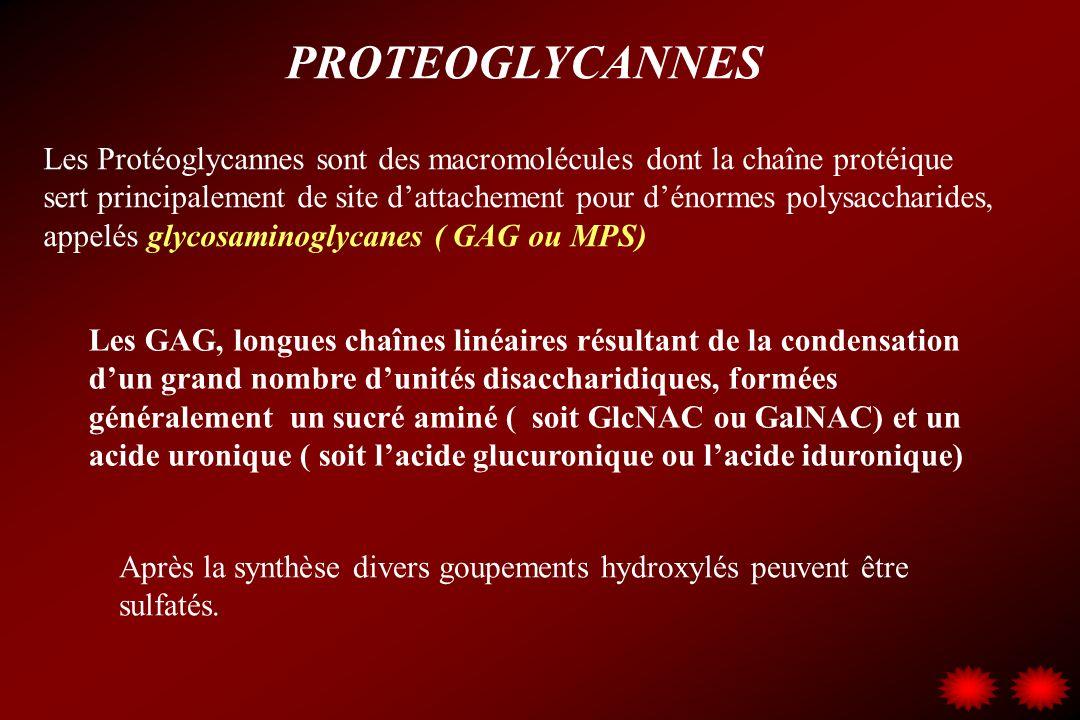 PROTEOGLYCANNES Les Protéoglycannes sont des macromolécules dont la chaîne protéique sert principalement de site dattachement pour dénormes polysaccha