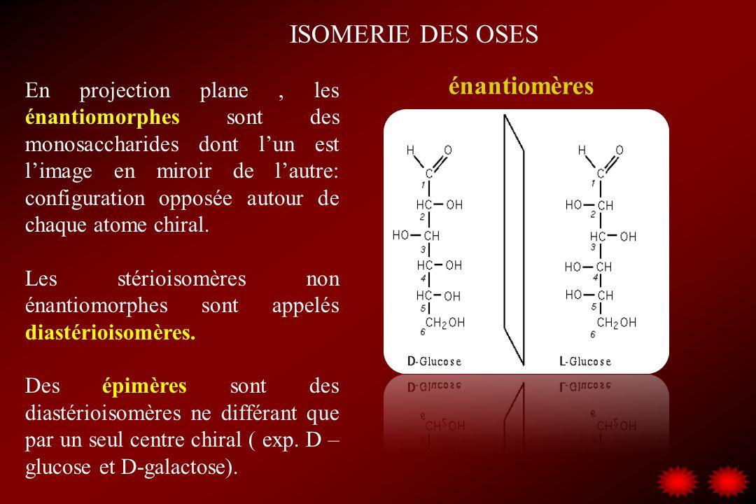 ISOMERIE DES OSES En projection plane, les énantiomorphes sont des monosaccharides dont lun est limage en miroir de lautre: configuration opposée auto