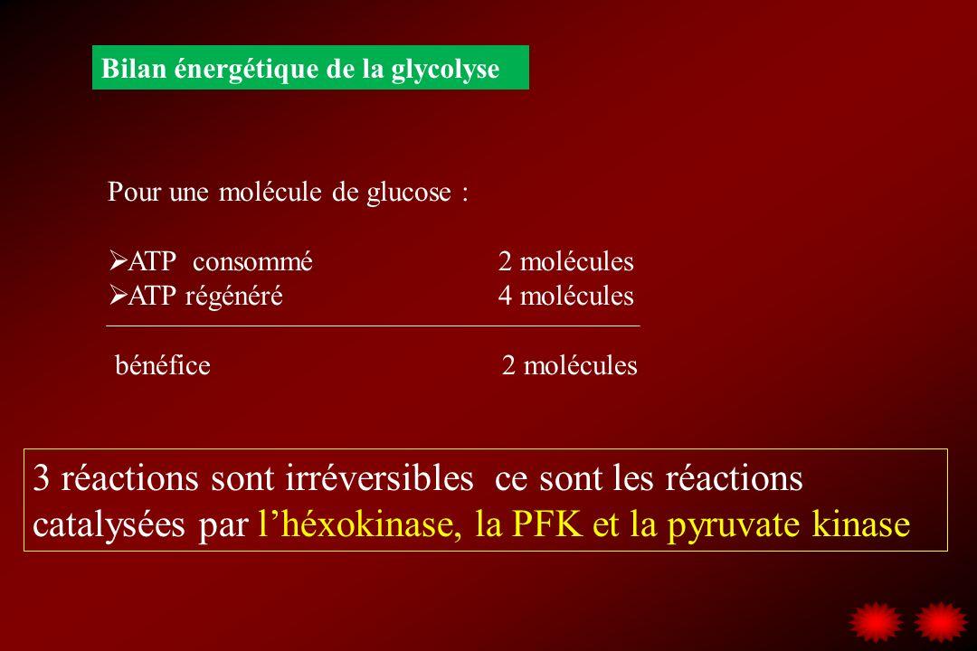 Bilan énergétique de la glycolyse Pour une molécule de glucose : ATP consommé 2 molécules ATP régénéré 4 molécules bénéfice 2 molécules 3 réactions so