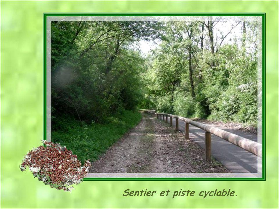 Sentier et piste cyclable.