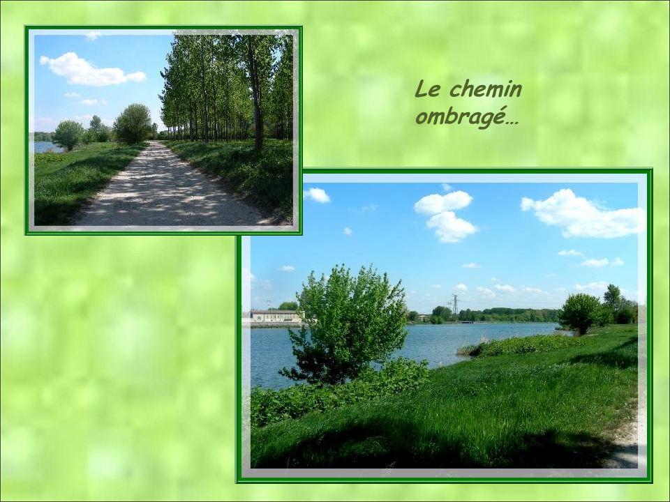 Depuis la construction du Canal de dérivation du Rhône pour faciliter la navigation, Serrières ne voit que peu de bateaux. Cest le vieux Rhône dans so