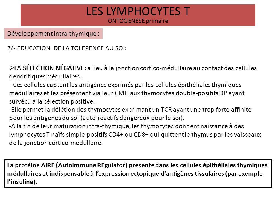 LES LYMPHOCYTES T ONTOGENESE primaire Développement intra-thymique : 2/- EDUCATION DE LA TOLERENCE AU SOI: LA SÉLECTION NÉGATIVE: a lieu à la jonction