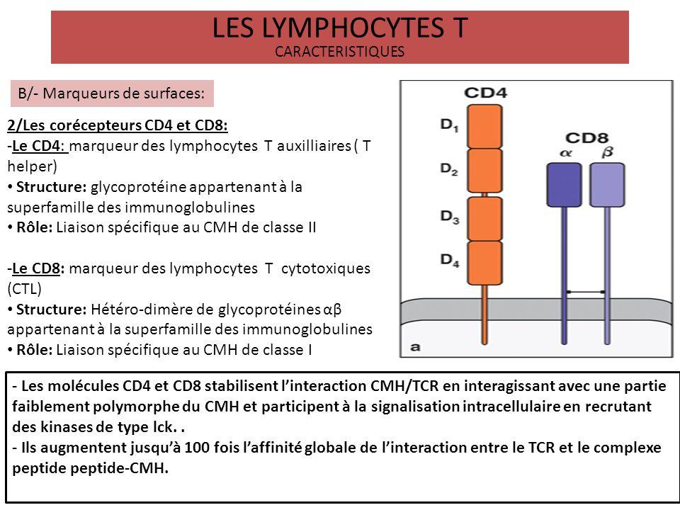 LES LYMPHOCYTES T CARACTERISTIQUES B/- Marqueurs de surfaces: -Le lymphocyte T peut exprimé entre autres marqueurs comme: des molecules de costimulation: CD28, CD40L des marqueurs dactivation: CMH classe II, CD25