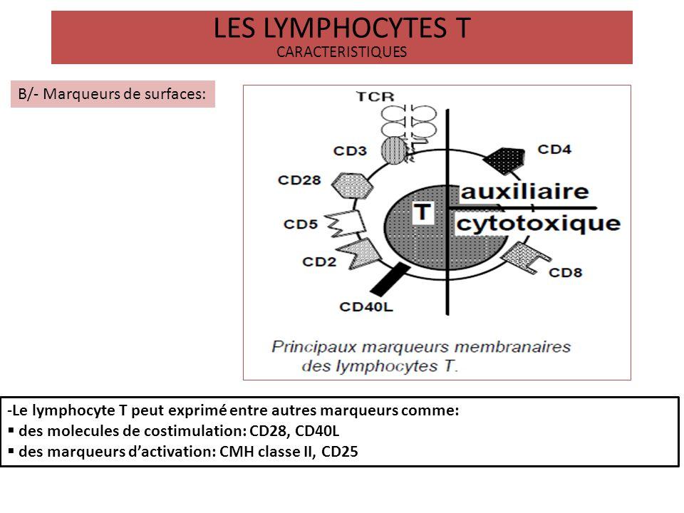 LES LYMPHOCYTES T CARACTERISTIQUES B/- Marqueurs de surfaces: -Le lymphocyte T peut exprimé entre autres marqueurs comme: des molecules de costimulati