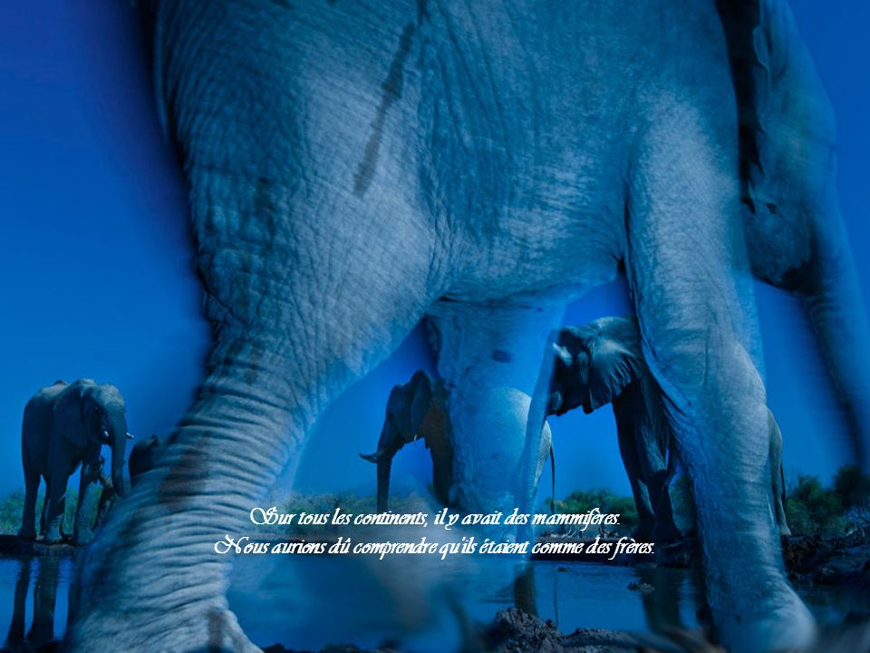 Sur tous les continents, il y avait des mammifères.