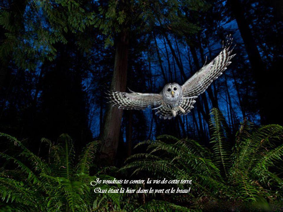 Ambiance musicale: La Symphonie de la terre, extrait de lalbum Harmonie Nanou et Stan le 07/05/2014