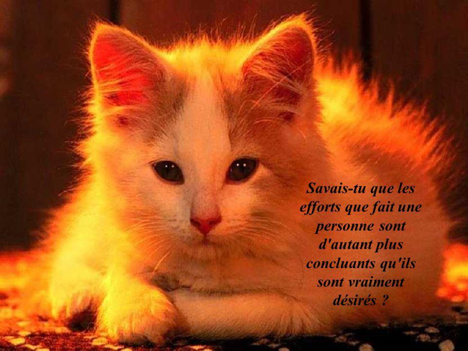Création de zoupinette2@yahoo.fr Texte et Images du Web Musique dEnnio Morricone