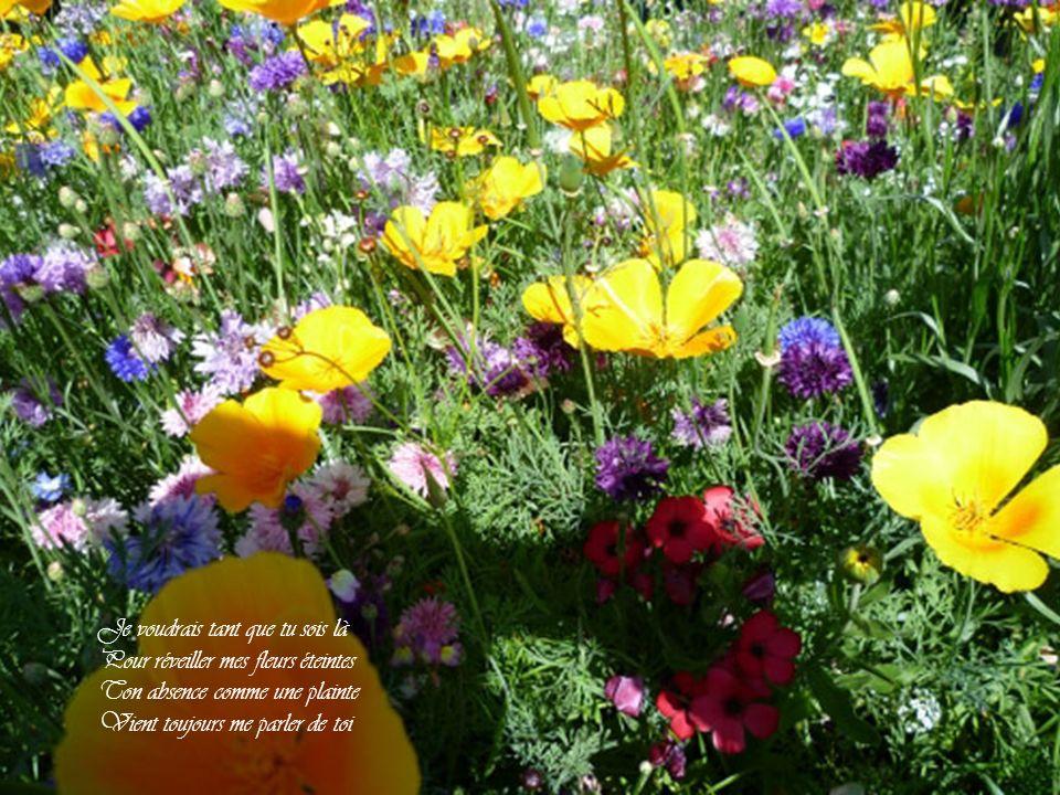 Dans mon désert y a pas de fleurs Pas d'oasis et pas de vent Et si tu venais plus souvent Ça ferait du bien à mon cœur Mon pauvre cœur