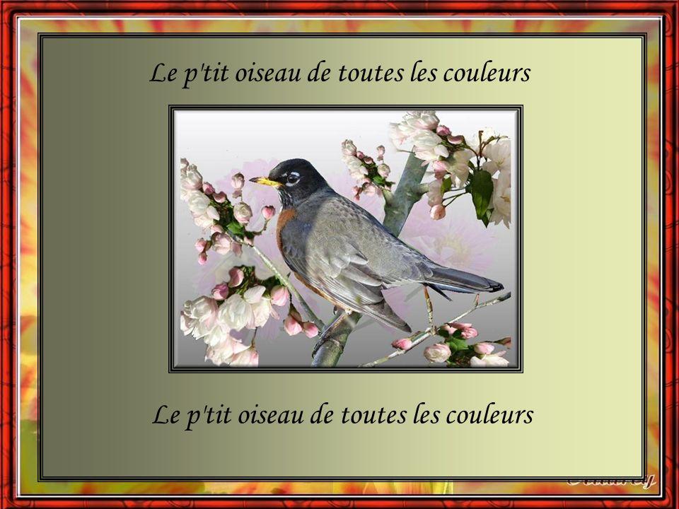 J peux pas voler, dis J peux pas nager, dis J suis prisonnier, dis M en veux pas Et bon voyage, dis Reviens-moi vite, dis Le p tit oiseau de toutes les couleurs