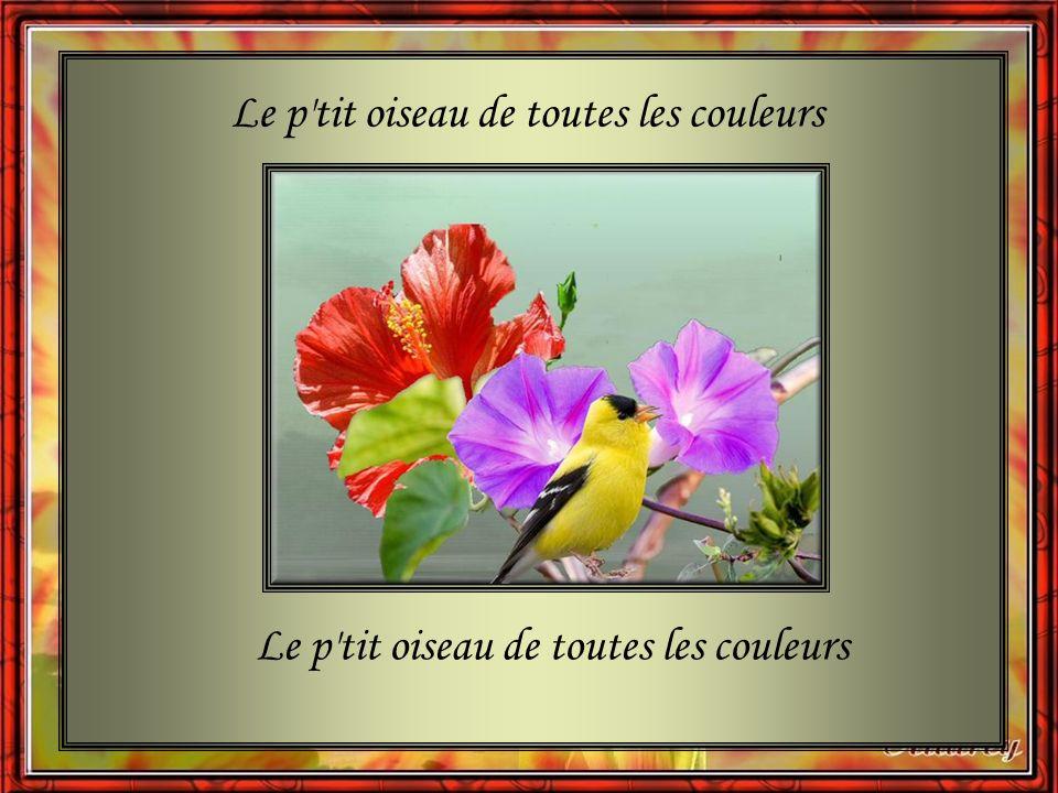 Diapo: Juliette Le petit oiseau de toutes les couleurs Interprète: Gilbert Bécaud Images prises sur le net, http://www.chezclaudy.com