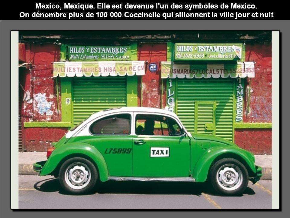 Mexico, Mexique. Elle est devenue l'un des symboles de Mexico. On dénombre plus de 100 000 Coccinelle qui sillonnent la ville jour et nuit