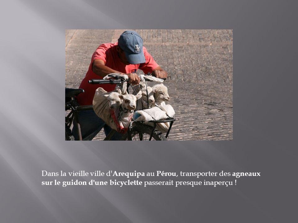 Voici comment en Chine, dans le village de Yangshuo par exemple ici à l'image, on a trouvé le moyen de transporter plusieurs brouettes à la fois, à bo