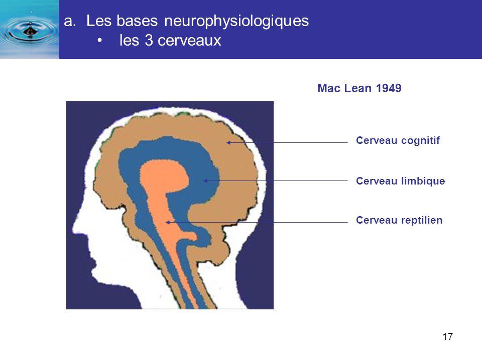 17 a. Les bases neurophysiologiques les 3 cerveaux Comprendre le fonctionnement de lêtre humain Cerveau cognitif Cerveau limbique Cerveau reptilien Ma