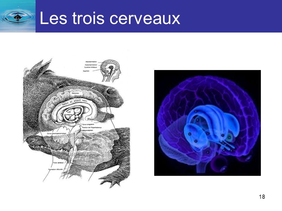 18 Les trois cerveaux