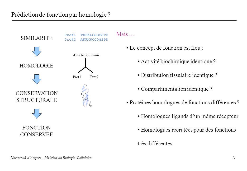 11 Prédiction de fonction par homologie ? SIMILARITE HOMOLOGIE CONSERVATION STRUCTURALE FONCTION CONSERVEE Prot1 TKRKLCGDSSPD Prot2 AKRKSCGDSSPD Prot1