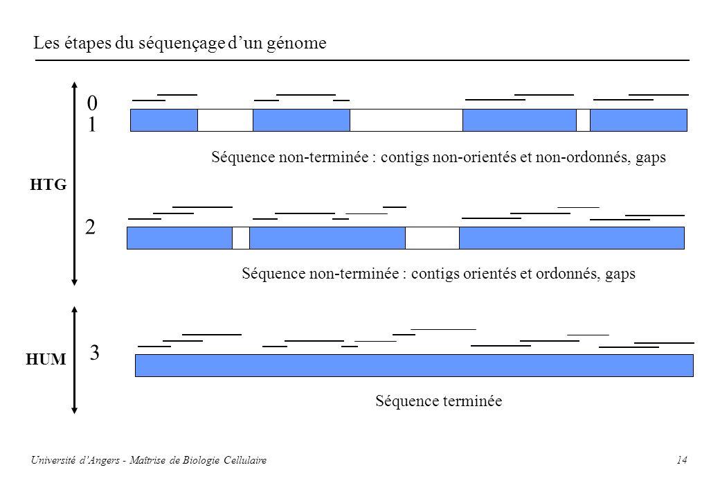 14 Les étapes du séquençage dun génome 0 1 2 3 Séquence non-terminée : contigs non-orientés et non-ordonnés, gaps Séquence non-terminée : contigs orie