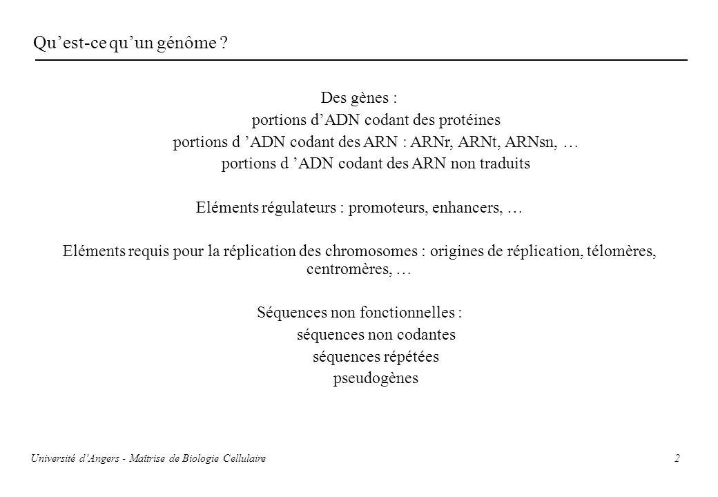 2 Quest-ce quun génôme ? Des gènes : portions dADN codant des protéines portions d ADN codant des ARN : ARNr, ARNt, ARNsn, … portions d ADN codant des