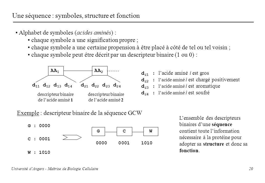 20 Une séquence : symboles, structure et fonction Alphabet de symboles (acides aminés) : chaque symbole a une signification propre ; chaque symbole a