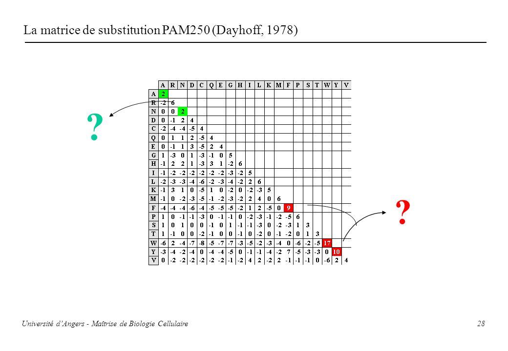 28 La matrice de substitution PAM250 (Dayhoff, 1978) ? ? Université dAngers - Maîtrise de Biologie Cellulaire