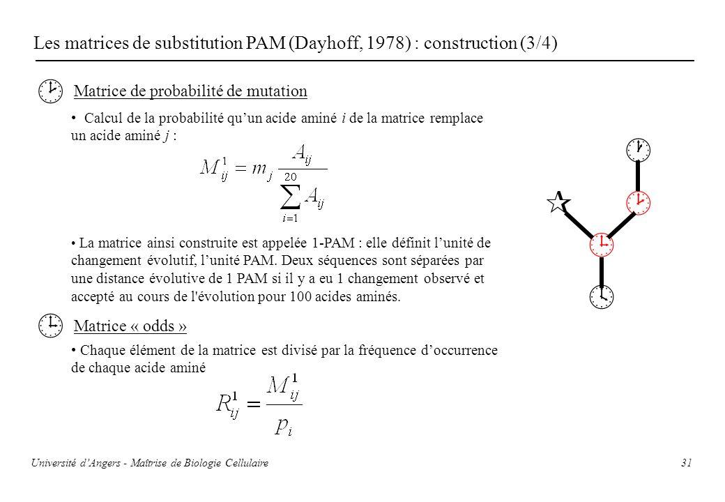 Université dAngers - Maîtrise de Biologie Cellulaire 31 Les matrices de substitution PAM (Dayhoff, 1978) : construction (3/4) Matrice de probabilité d