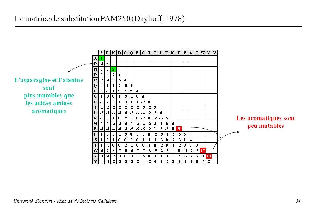 34 La matrice de substitution PAM250 (Dayhoff, 1978) Les aromatiques sont peu mutables Lasparagine et lalanine sont plus mutables que les acides aminé