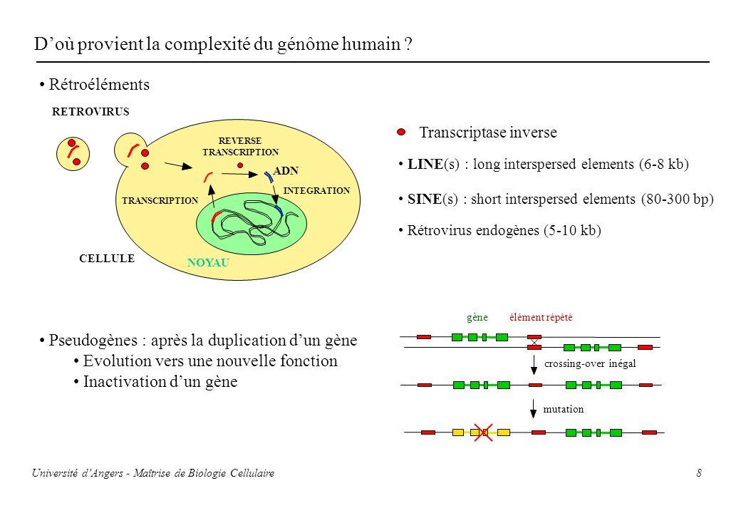 8 Doù provient la complexité du génôme humain ? NOYAU CELLULE ADN TRANSCRIPTION REVERSE TRANSCRIPTION INTEGRATION RETROVIRUS Transcriptase inverse LIN