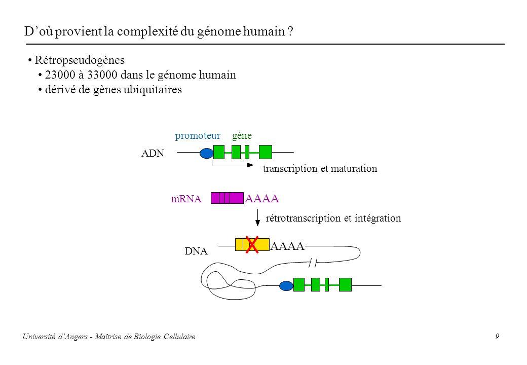 9 Doù provient la complexité du génome humain ? Rétropseudogènes 23000 à 33000 dans le génome humain dérivé de gènes ubiquitaires gènepromoteur AAAA t