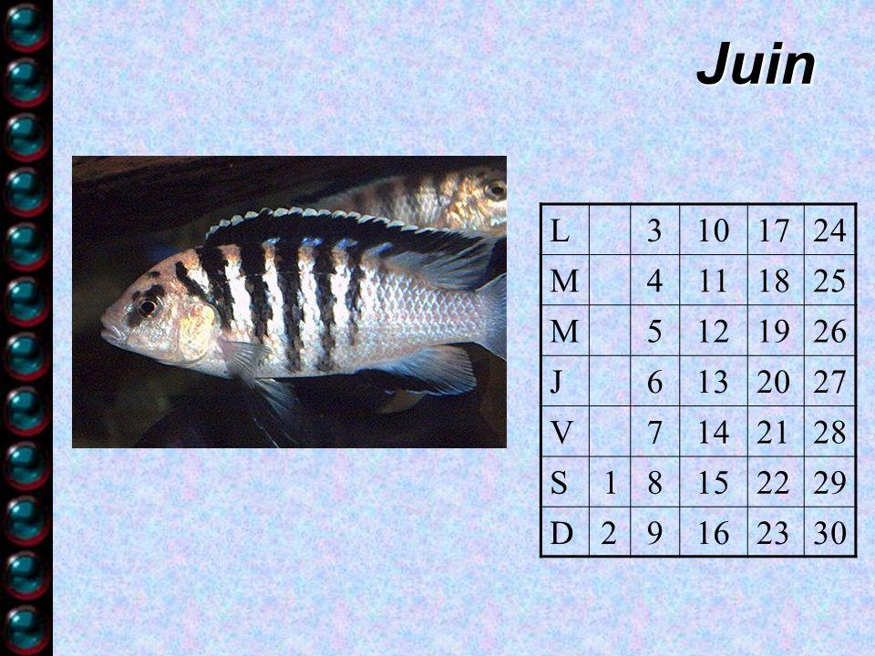 Juin L3101724 M4111825 M5121926 J6132027 V7142128 S18152229 D29162330