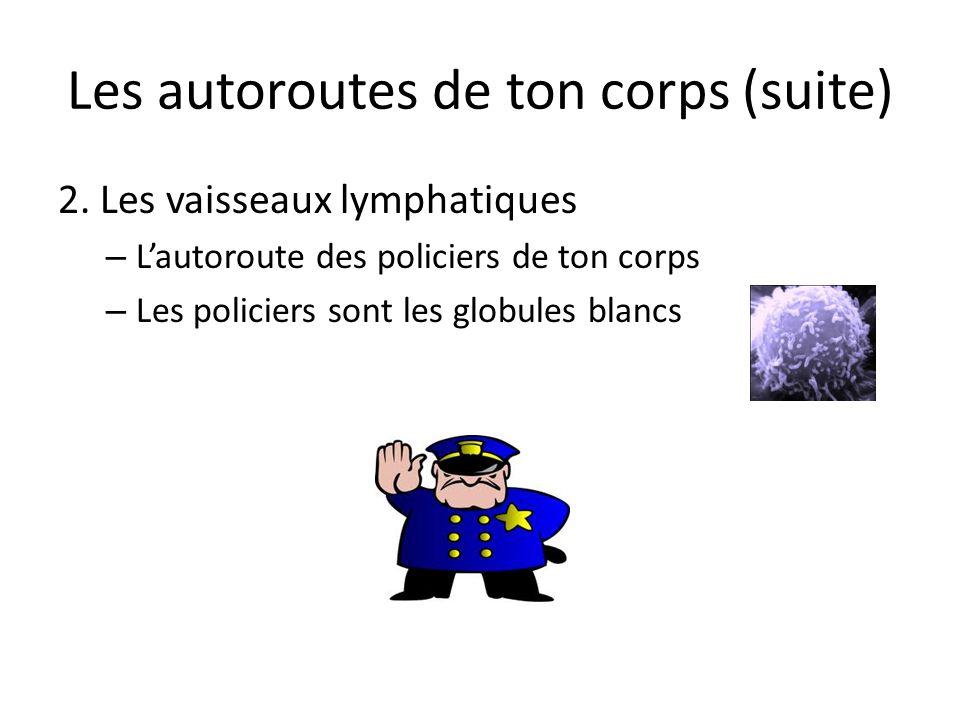 Les autoroutes de ton corps (suite) 2. Les vaisseaux lymphatiques – Lautoroute des policiers de ton corps – Les policiers sont les globules blancs