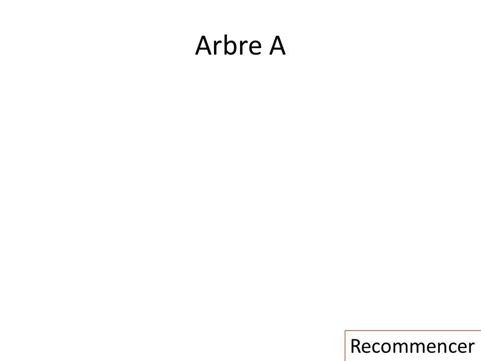 Arbre A Recommencer