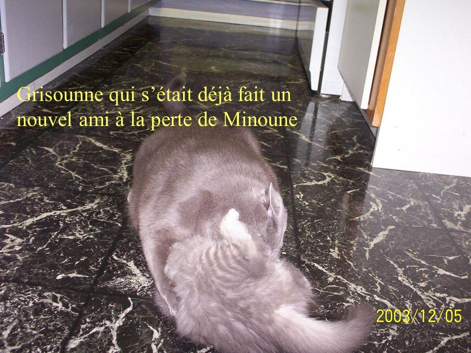 Minoune, la vieille chatte qui est aussi partie le lendemain de cette photo