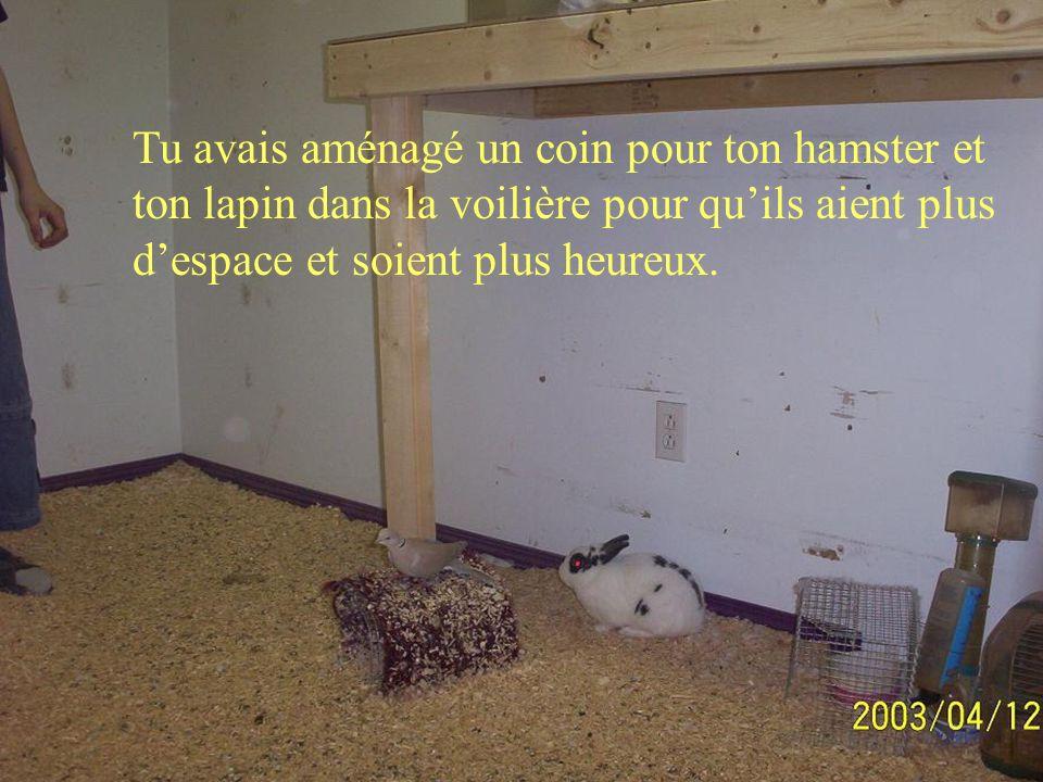 Tu avais aménagé un coin pour ton hamster et ton lapin dans la voilière pour quils aient plus despace et soient plus heureux.