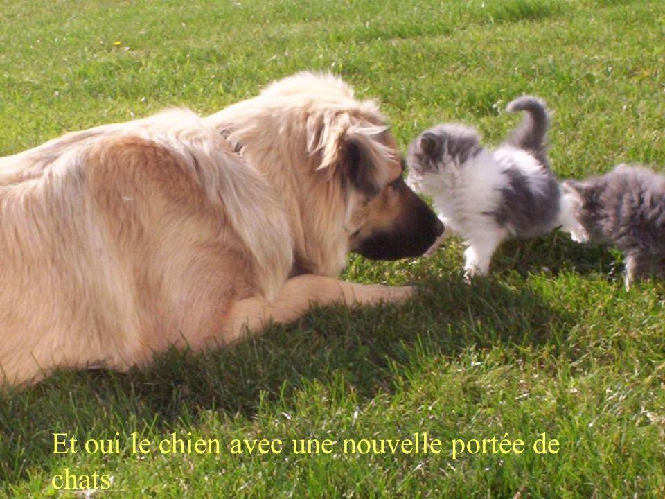 Et oui le chien avec une nouvelle portée de chats