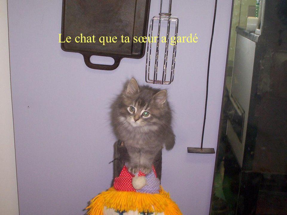 Le chat que ta sœur a gardé