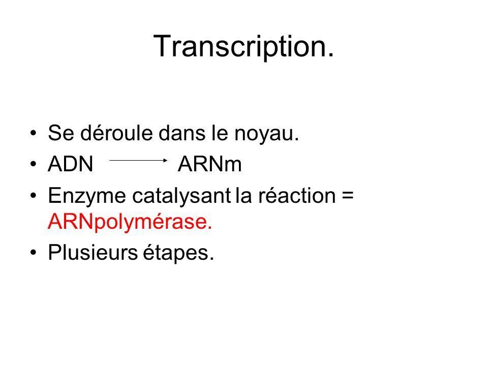 Transcription. Se déroule dans le noyau. ADN ARNm Enzyme catalysant la réaction = ARNpolymérase. Plusieurs étapes.