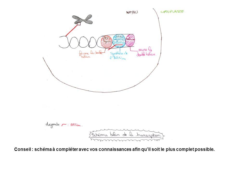 Schéma bilan. Conseil : schéma à compléter avec vos connaissances afin quil soit le plus complet possible.