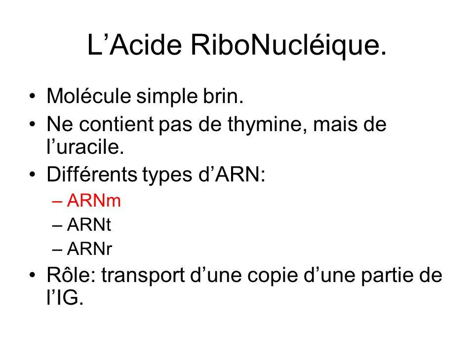 LAcide RiboNucléique. Molécule simple brin. Ne contient pas de thymine, mais de luracile. Différents types dARN: –ARNm –ARNt –ARNr Rôle: transport dun
