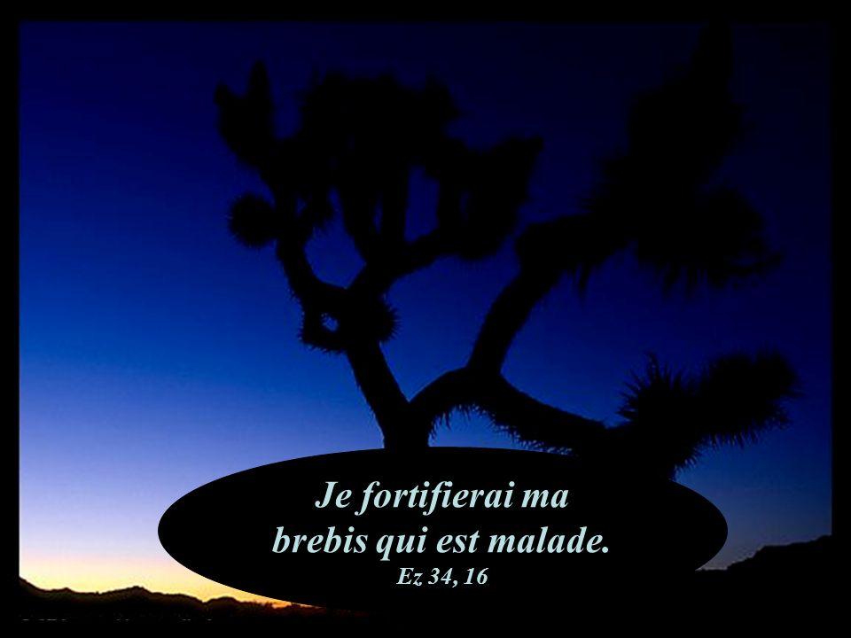 Il pria Dieu qui lexauça. 2 Ch 32, 24