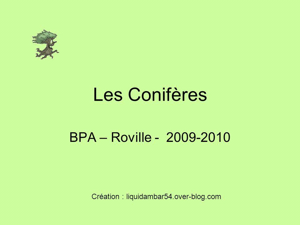 Les Conifères BPA – Roville - 2009-2010 Création : liquidambar54.over-blog.com