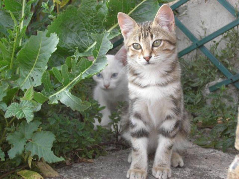 La petite chatte blanche reste toujours craintive et effacée